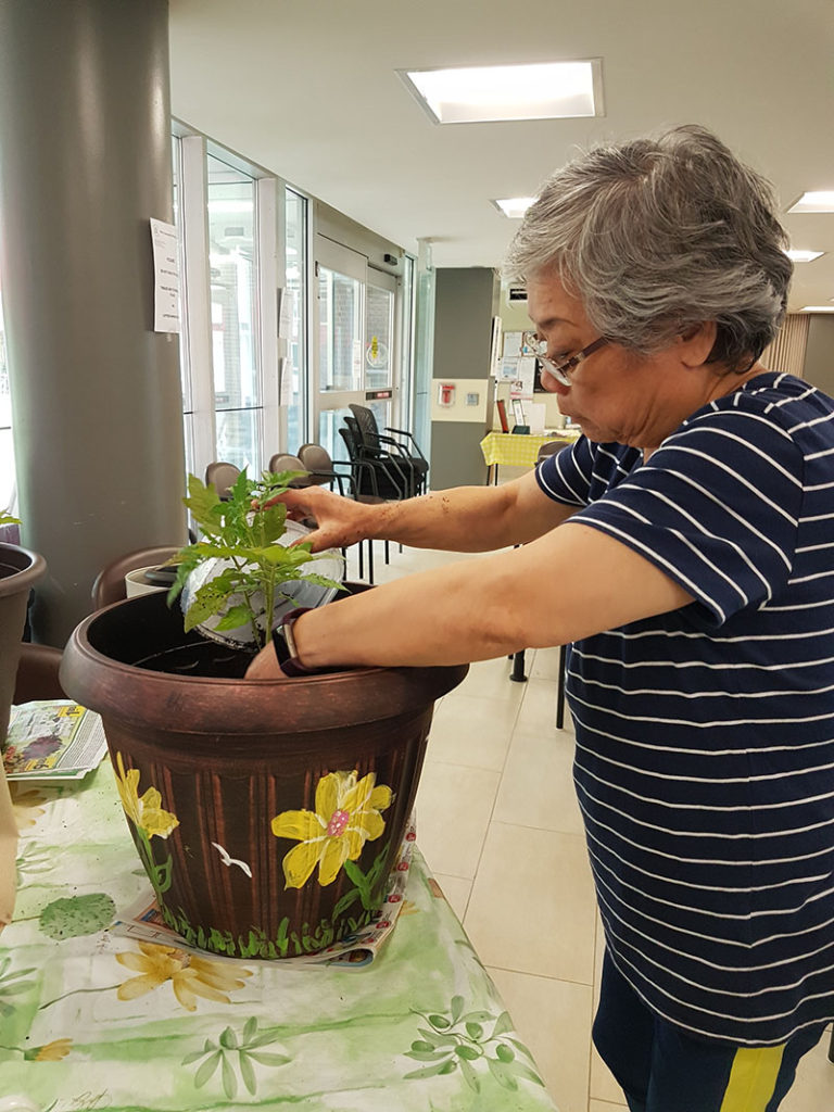 Adult planting peppers in a pot