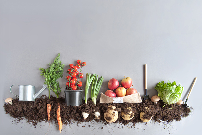 Farm to Fork - vegetables in dirt